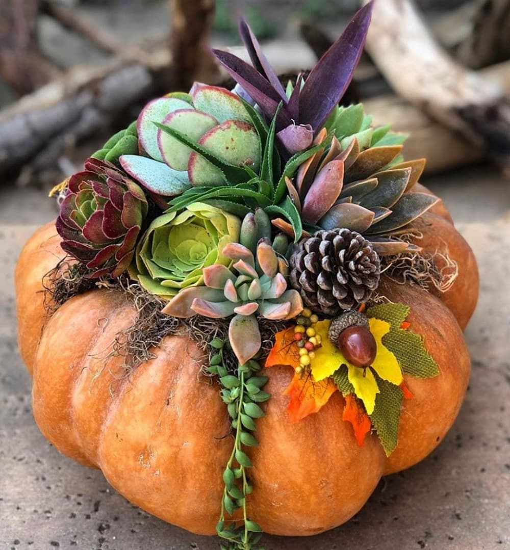 Succulent Pumpkin Workshop @ RSF Garden Club